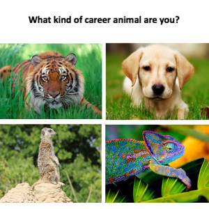 Career animals